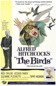 Jersey Shore Vacations: Cal Schwartz - The Birds