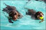 Jersey Shore Amusement Parks: Morey's Piers SPCA