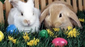 Jersey Shore Easter Egg Hunts