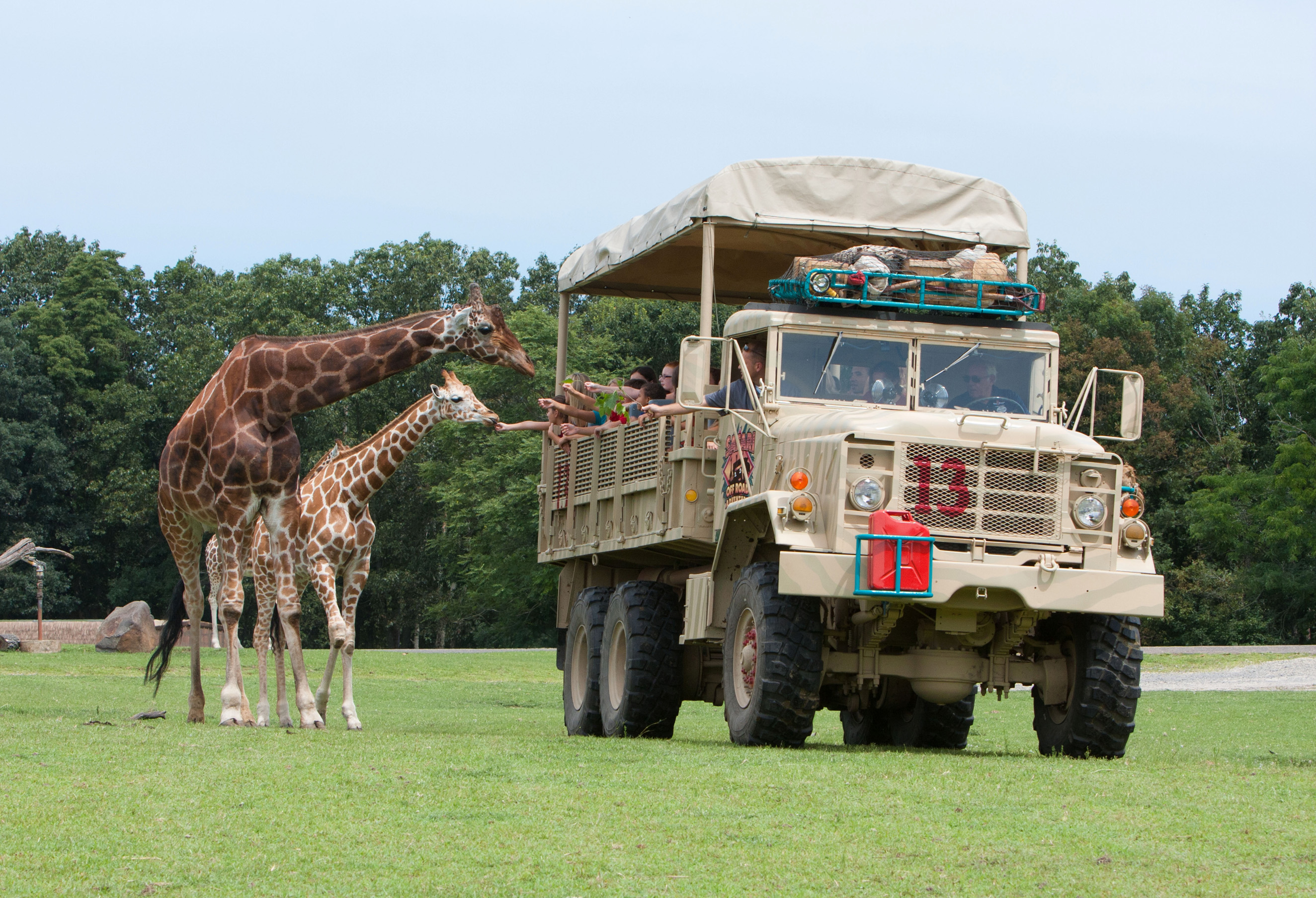 Safari Tour In New Jersey