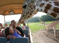 Six Flags great Adventure Safari Events