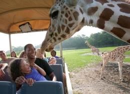 Six Flags Academic Adventures - Safari Off Road Education