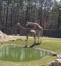 Six Flags Safari Adventure Review