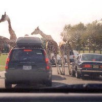 Six Flags Great Adventure Safari Will Open as Special Drive-Through Experience